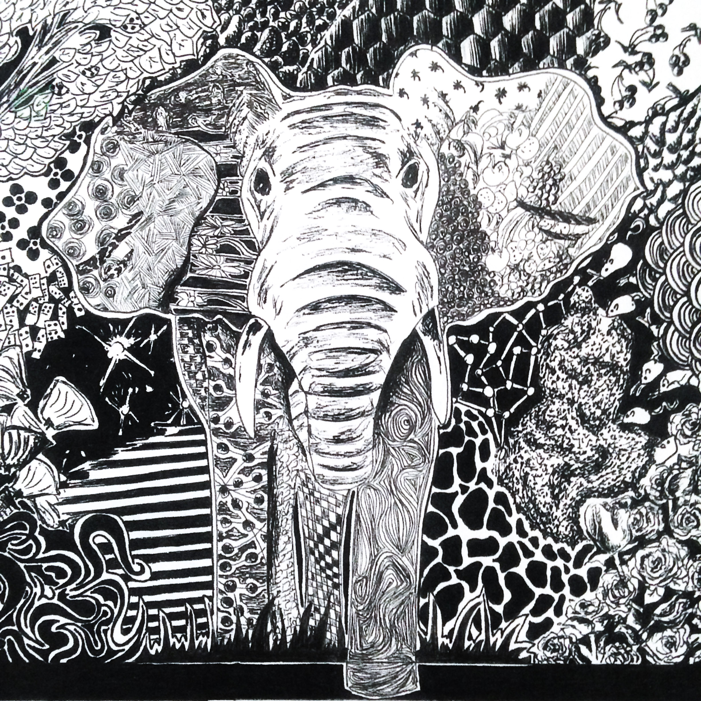 Elephant by KM