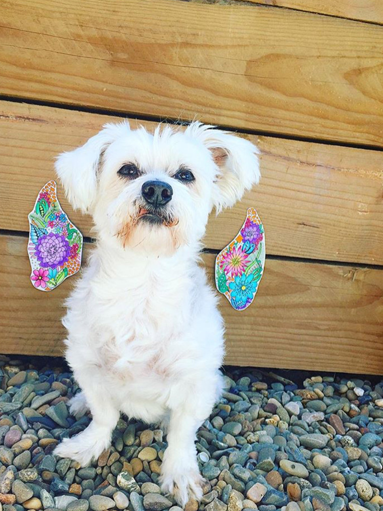 Pup with wings with Kelsey Montague Art